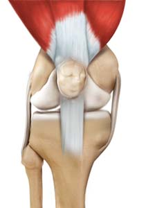 Arthroscopic Reconstruction of the Knee for Ligament Injuries